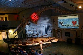 Whale Hunt Presentation