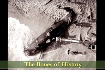 The Bones of History, a film by John Stanton